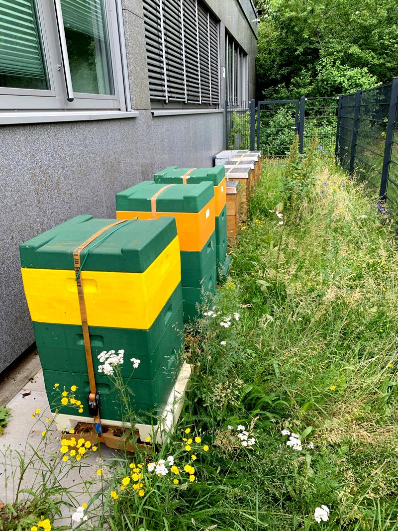 Signal Iduna Bienenkästen